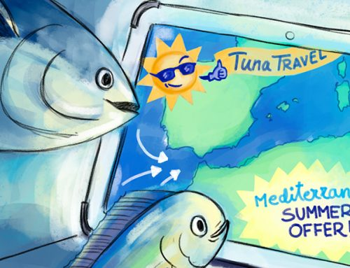 TUNA SPECIES THAT BREED IN THE MEDITERRANEAN  Which they are and how they get here