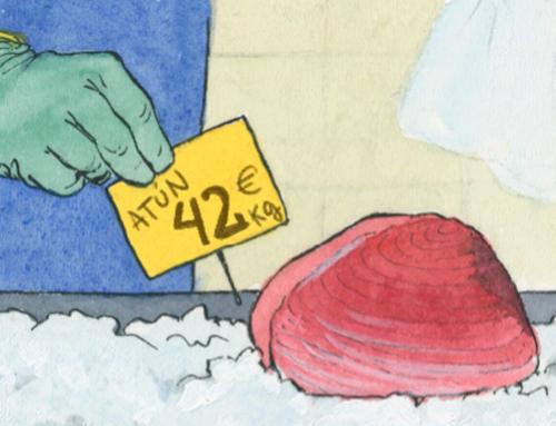 CONSELLS ÚTILS PER COMPRAR TONYINA Guia breu per comprar tonyina fresca o congelada