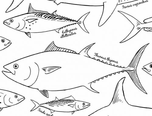 COLOR THESE LARGE PELAGIC FISH  Downloadable PDF