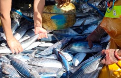 Científicos y pescadores en Mazarrón