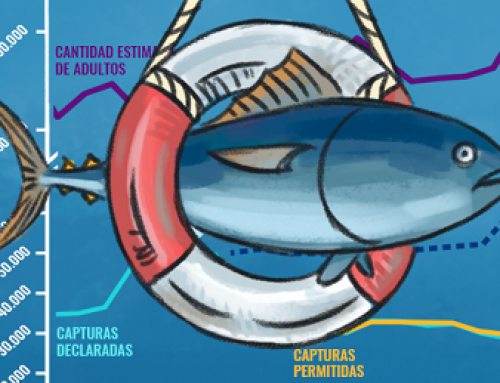 Atlantic Bluefin Tuna: The Path to an Amazing Recovery