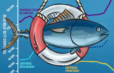 Imagen introducción artículo recuperación del atún rojo