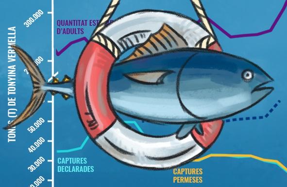 Portada article Recuperació de la tonyina vermella atlàntica