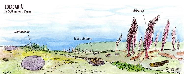Dibuix-sobre-el-primer-animal-marí