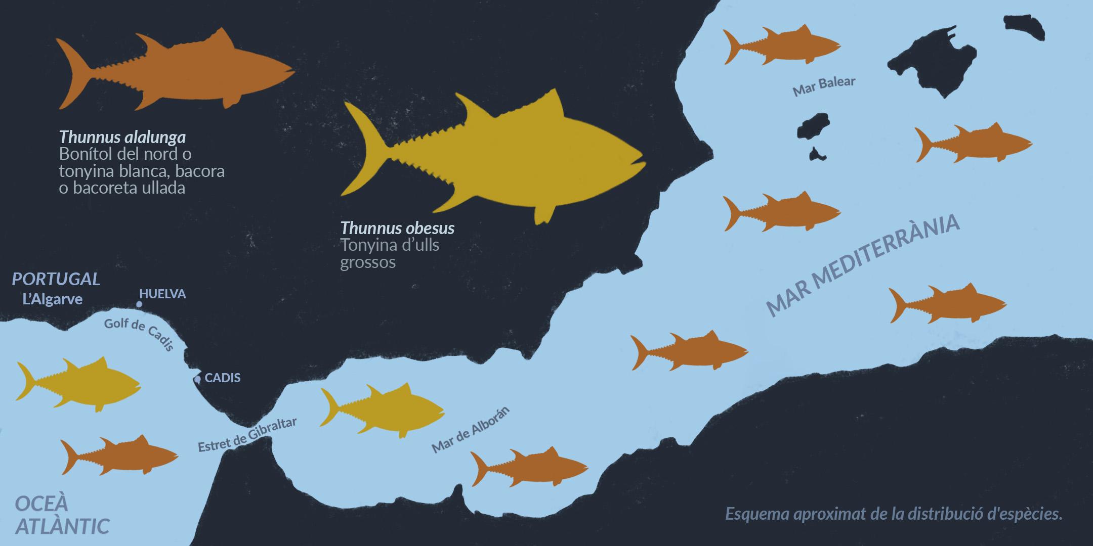 Mapa de distribució aproximada de la bacora i tonyina d'ulls grossos a la Mediterrània oriental i l'Algarve portuguès