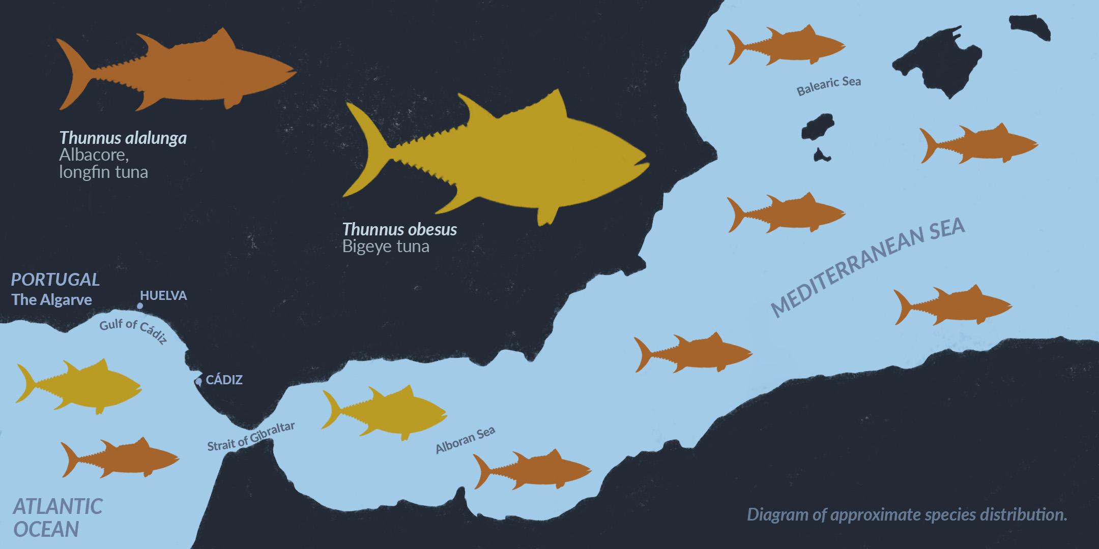 Mapa de distribución aproximada del thunnus alalunga, albacora, y thunnus obesus, patudo en el Mediterráneo oriental y el Algarve portugués
