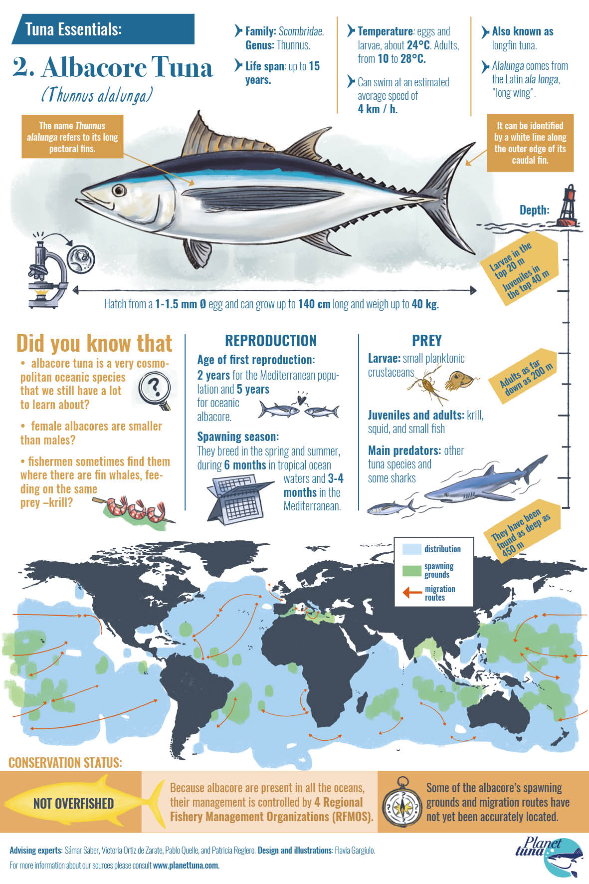 Infographics factsheet about albacore tuna