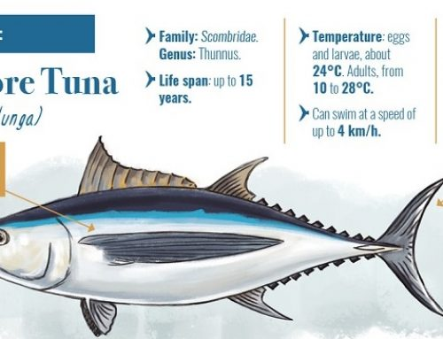 ALBACORE TUNA ESSENTIAL FACT SHEET