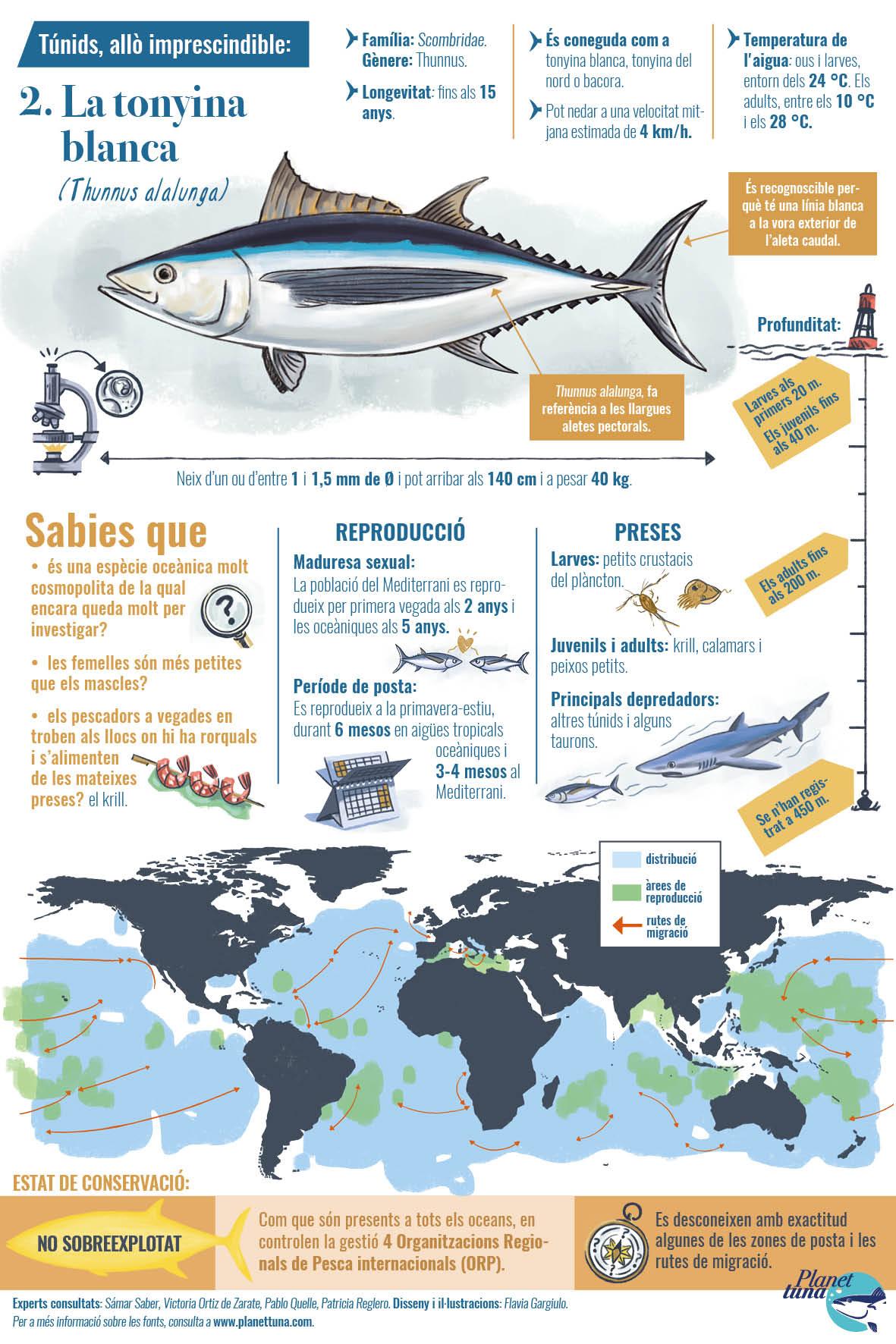 Fitxa infogràfica amb dades essencials sobre la tonyina blanca