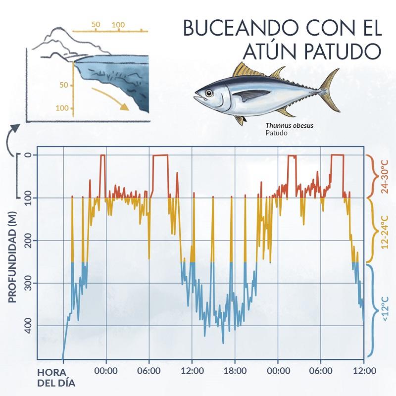 Infografía sobre el atún patudo y la profundidad a la que pueden submergirse en reelación a la hora del día y temperatura del agua