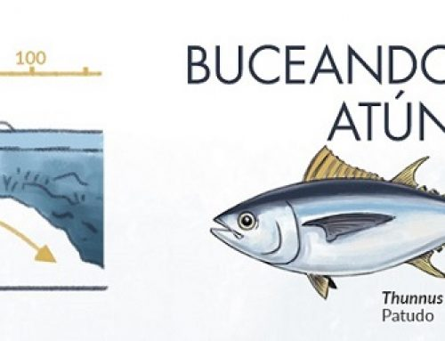 WHY IS IT SO HARD TO FISH TUNA FROM THE SHORE?