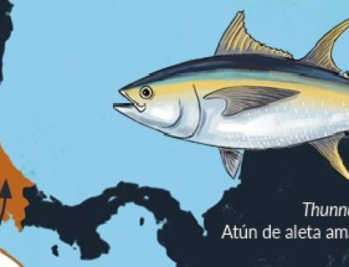 HOW MANY TUNA SPECIES ARE THERE IN COSTA RICAN WATERS?