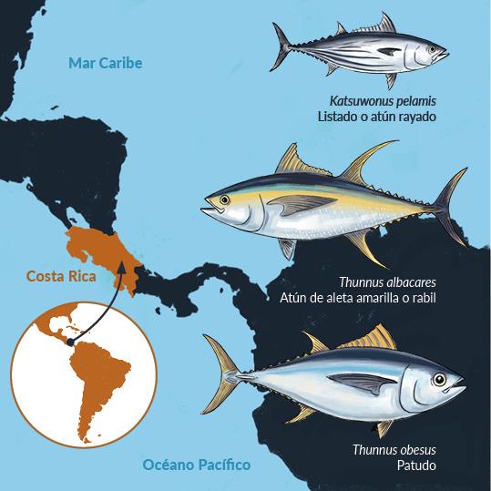 Ingografía con los túnidos que se encuentran en las aguas del Pacífico y el Caribe de Costa Rica