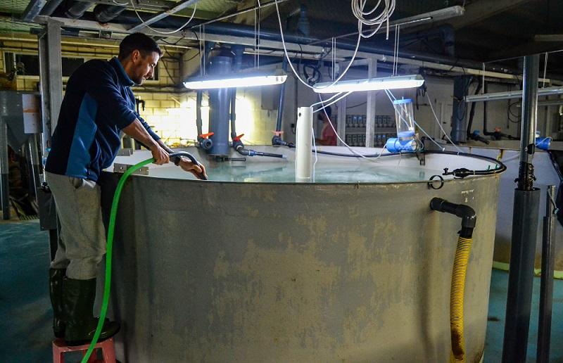 Persona haciendo tareas de mantenimiento en los tanques de agua de ICAR Murcia