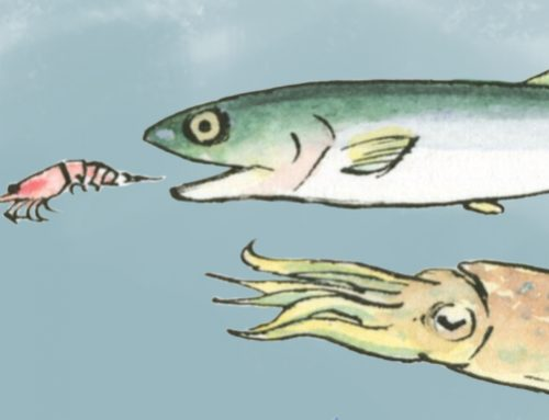 ANISAKIS: HOW DID IT GET TO THE FISH IN MY DISH?  Find out about Anisakis and avoid food poisoning