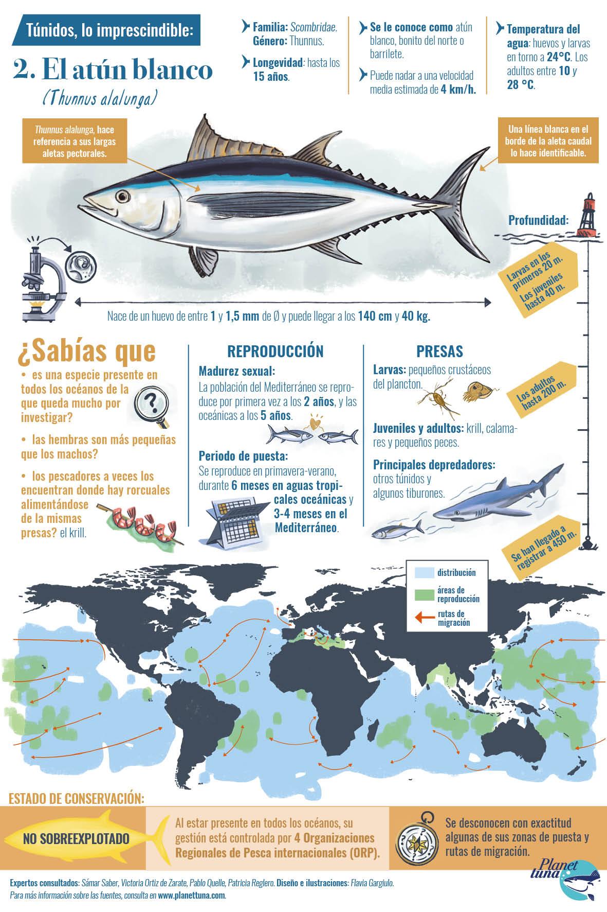 Ficha infográfica con los datos esenciales sobre el atún blanco o bonito del norte