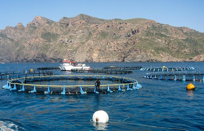 Bluefin_tuna_farms_in_Murcia_Spain